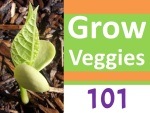Grow Veggies101